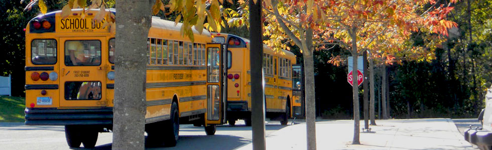 fall trees and buses