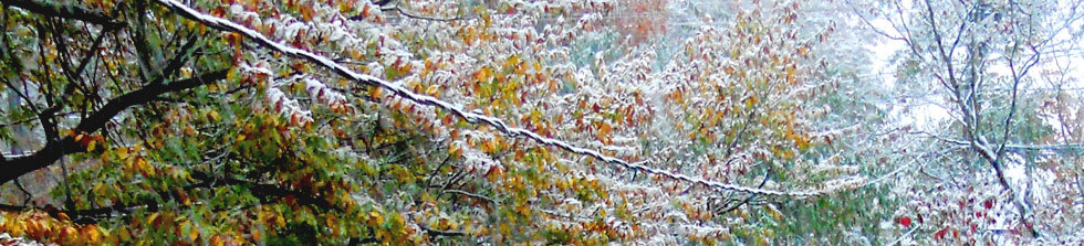 autumn leaves snow october storm